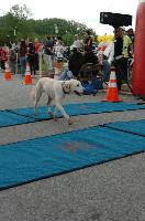 Dozer Runs Half Marathon