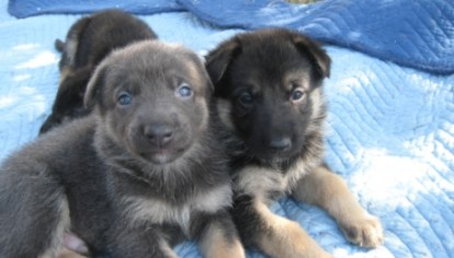 1 in 3 Dog Owners Could Be Buying Their Pet from Puppy Farmers