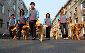 Guide Dog Trainers China
