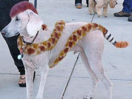 Dog as a snake