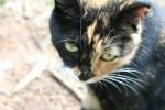 Dora the cat