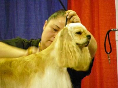 Super Zoo regular class grooming