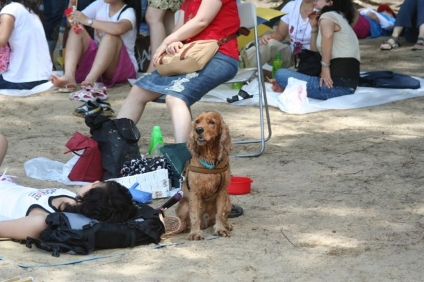 Dog on the beach hong kong