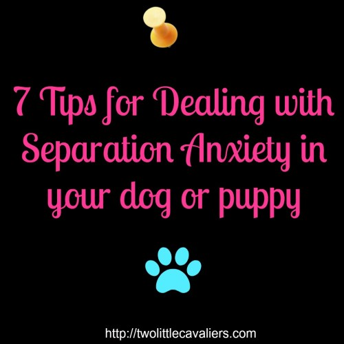 7 tips for dealing with separation anxiety in your dog or puppy