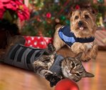 Gift Guide for Pets Presented by BlogPaws and HighPaw Media