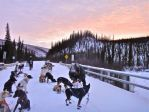 Top of the World 350 Sled Dog Race / Pet Bloggers Blog Hop