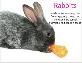 Rabbits need Special Care