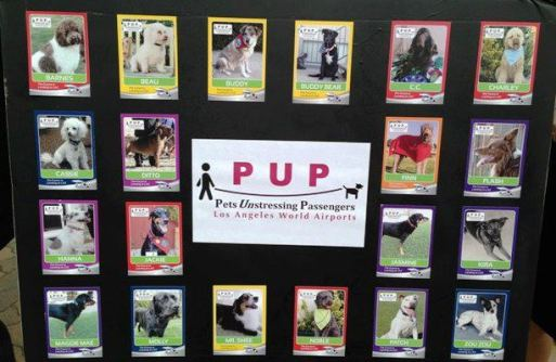 Pets Unstressing Passengers Trading Cards
