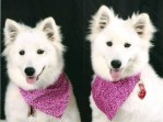 Have You Seen These Missing Dogs / Pet Bloggers Blog Hop