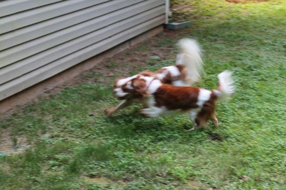 Davinia and Indiana running