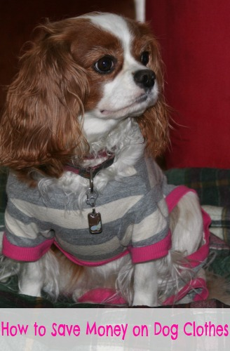 How to Save Money on DOg Clothes 1