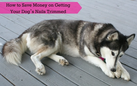 How to Save Money on Getting your Dog's Nails Trimmed
