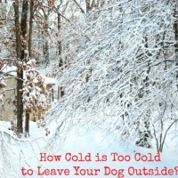 How Cold is Too Cold to Leave Your Dog Outside?