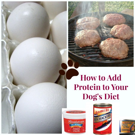 How to Add Protein to Your Dog's Diet