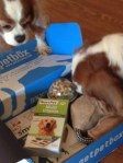 #PetBox Keep Your Dog Entertained During the Winter Months + Giveaway