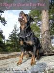5 Ways to Save on Dog Food