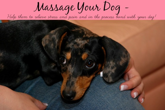 Massage Your Dog Stress and Pain Relief