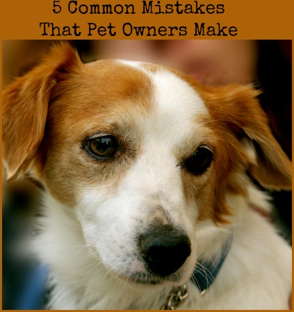 5 Common Pet Owner Mistakes