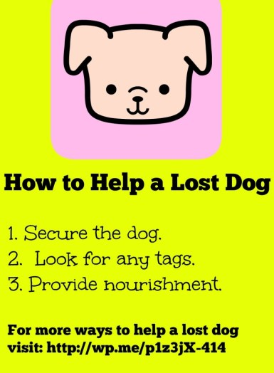 How to help a lost dog