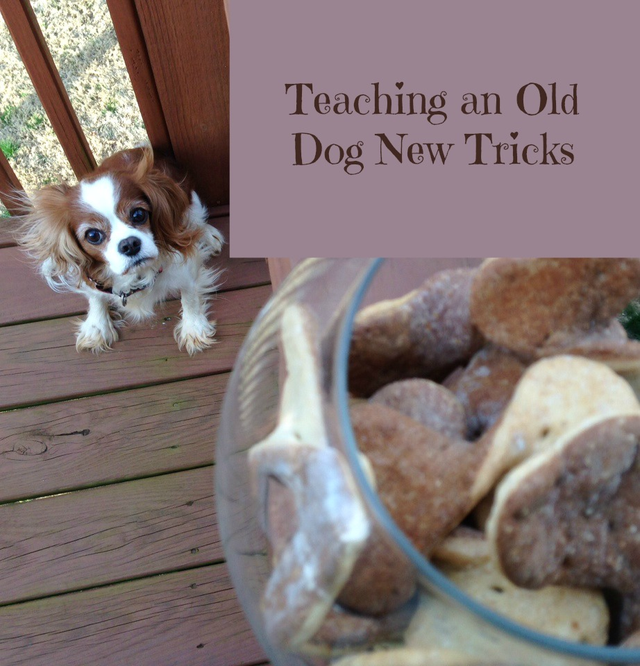 You Can T Teach An Old Dog New Tricks Story