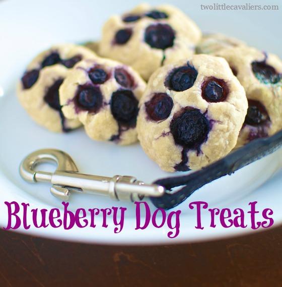Blueberry Dog Treats