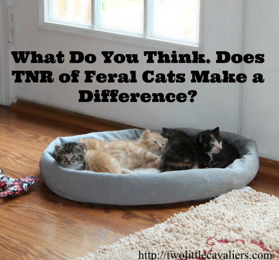 What Do You Think. Does TNR of Feral Cats Make a Difference? Join the Discussion