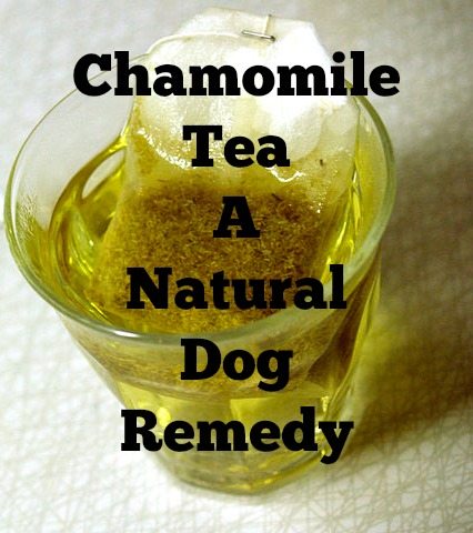 Natural Remedy Dog Upset Stomach