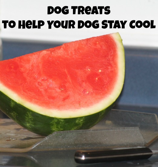 how to help your dog cool down