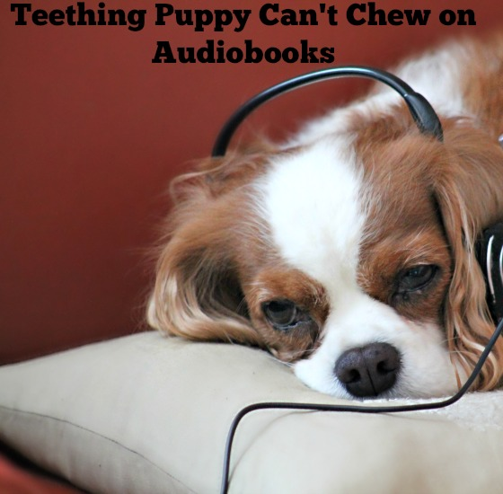 Teething Puppy Can't Chew on Audiobooks 1