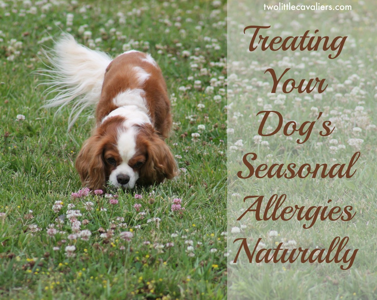Treating Skin Allergies In Dogs Naturally