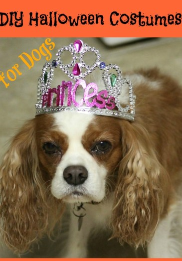 5 DIY Halloween Costumes for Dogs