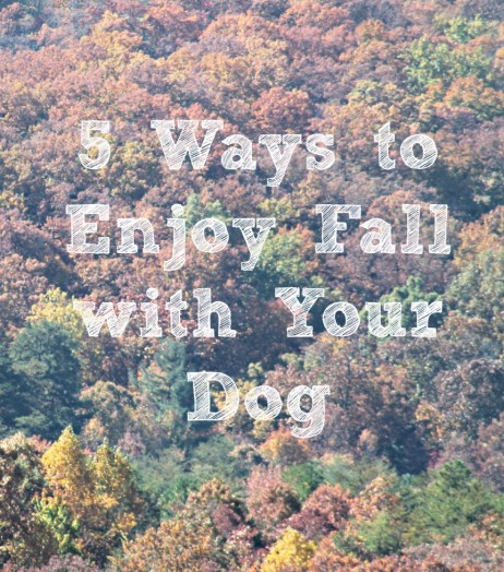 5 Ways to Enjoy Fall with Your Dog