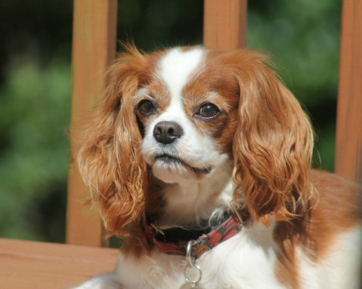 Is a Senior Dog Right For Me?