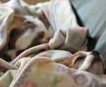 How to Keep Your Dog Warm in The Winter buy fleece fabric
