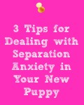 Separation Anxiety and Your New Puppy
