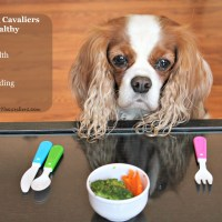 Dog Care - Keeping Your Cavalier Healthy