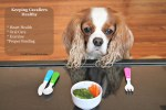 Dog Care – Keeping Your Cavalier Healthy