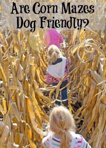 Are Corn Mazes Dog Friendly