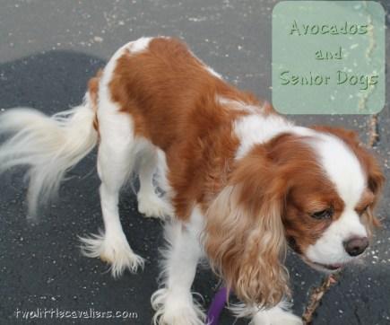 Avocados and Senior Dogs #AvoDermNatural