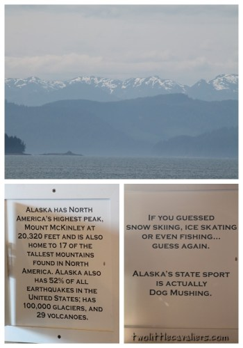 Alaska's State Sport is Dog Mushing #BetterWithPets