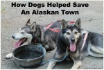 How Dogs Helped Save An Alaskan Town