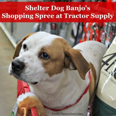 Shelter Dog Banjo'sshopping Spree at #TractorSupply