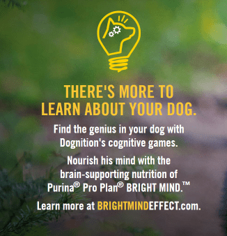 Dognition and Bright Mind