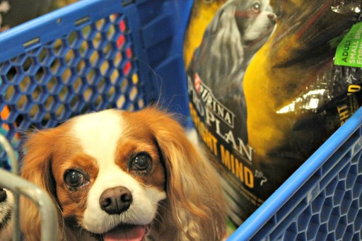 Senior Dogs Go Shopping for more Pro Plan #BrightMind