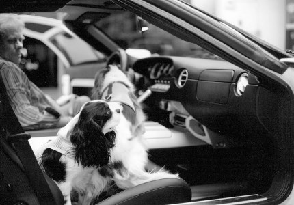 Willie and Dixie two of the Spoiled Cavaliers in the 2005 Ford GT