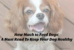 How Much to Feed Dogs A Must Read To Keep Your Dog Healthy