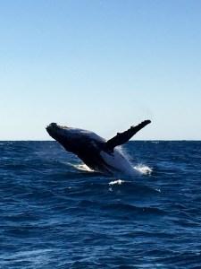 wieloryb w oceanie