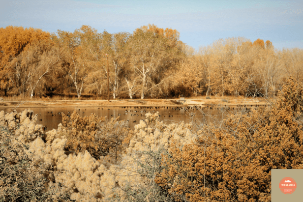 Photo from Viewing Deck on Cibola Nature Trail