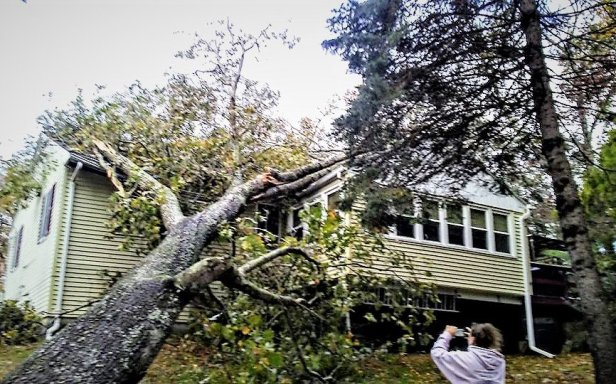 Photo of Tree on House