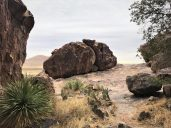 Photo of Rock and Plants